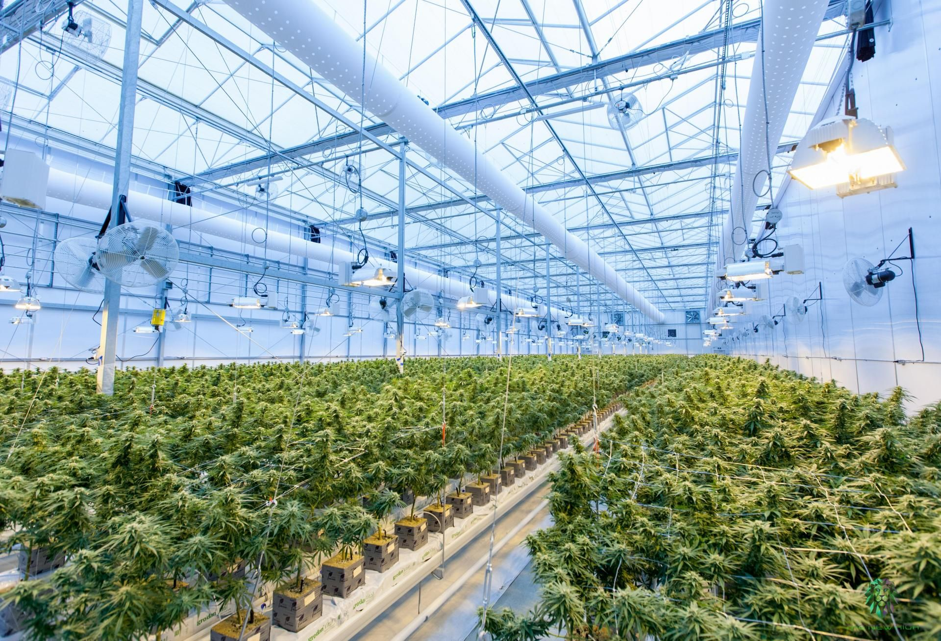 Surging Industrial Demand Makes It Even Harder For Cannabis Cultivators To Grow