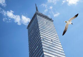 Boston's Growing Skyline Is A Bird Deathtrap