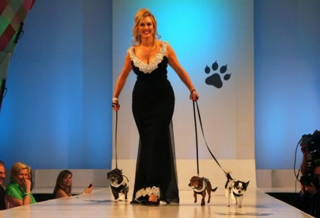 Fashion for Paws