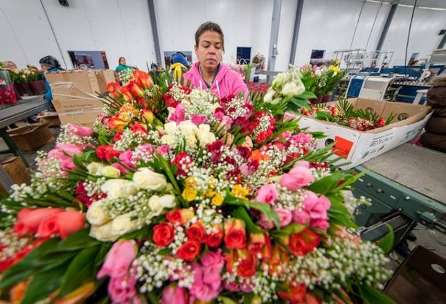 Flower Power During Valentine's Season