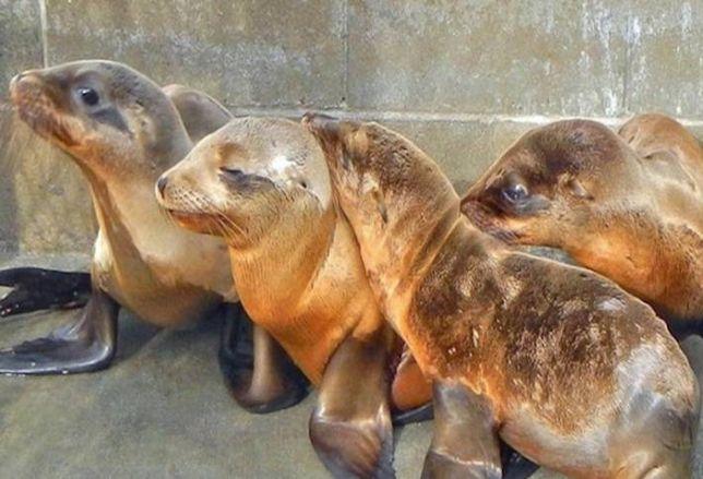 SAIC Saves Sea Lions
