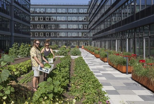 Staten Island's Hottest Amenity: A Commercial Farm?