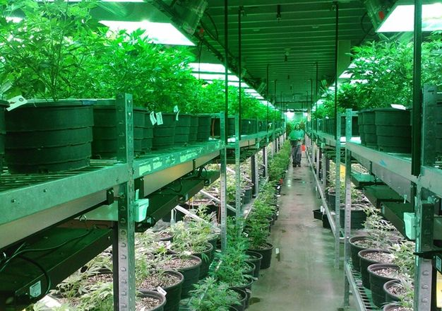 Marijuana Cultivation Now A Stable Industrial Market Niche, CBRE Reports