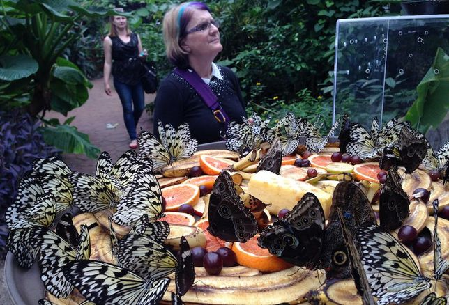 Tourist Draw Butterfly World Says It Could Close If County Raises Rent 500%