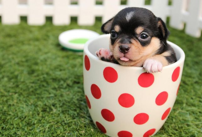 Pup in a cup