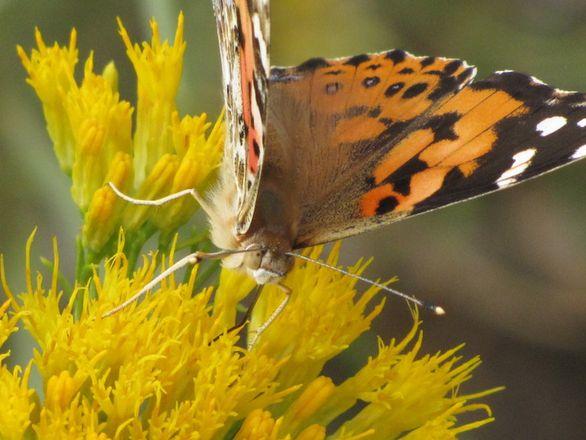 Centerra Receives State's First Designation As Community Wildlife Habitat
