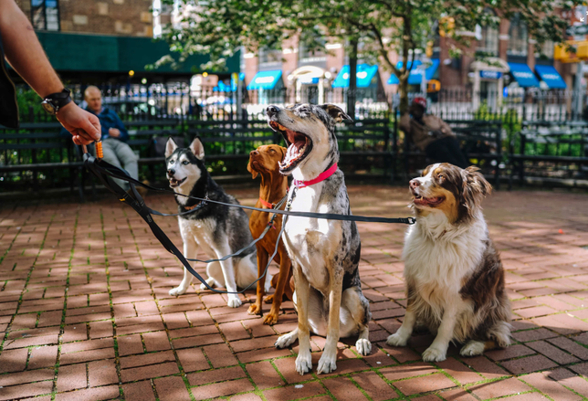 NYC Pet Laws Put Landlords In A Bind Between Accommodation And Abuse