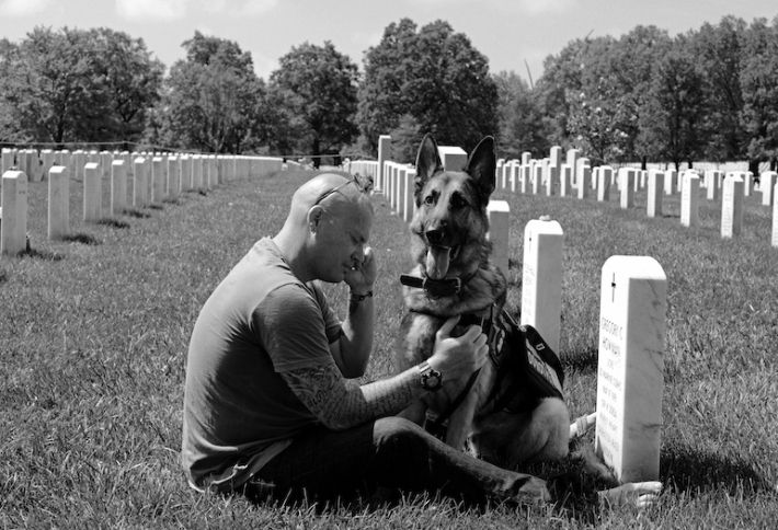 Could the VA Turn to... Dogs?