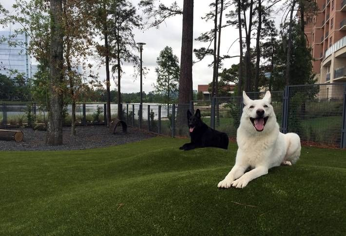 The Best Apartments for Your Dog