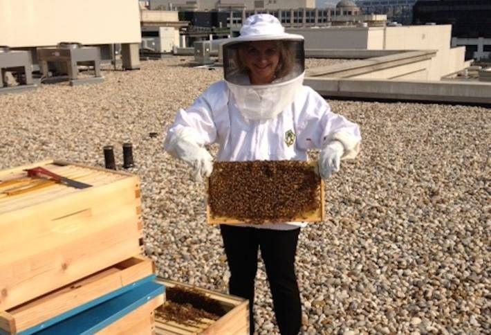 Brookfield's Newest Rooftop Amenity: Bees
