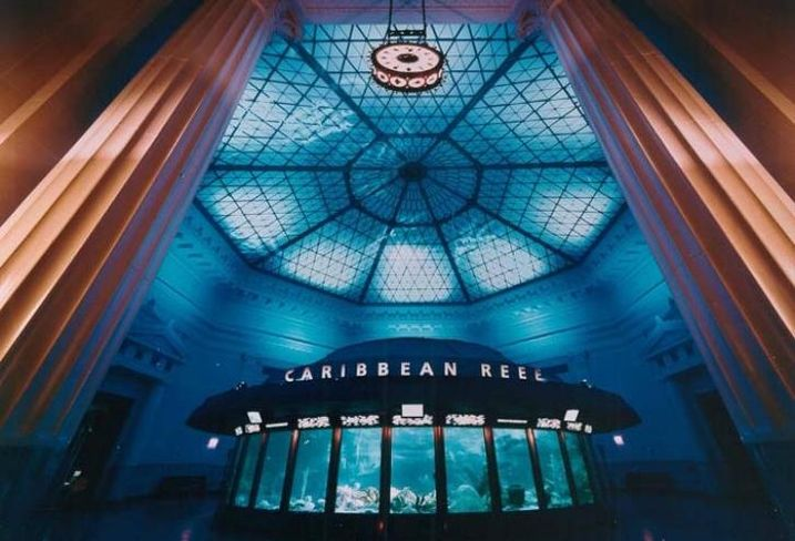 Shedd Aquarium, Chicago