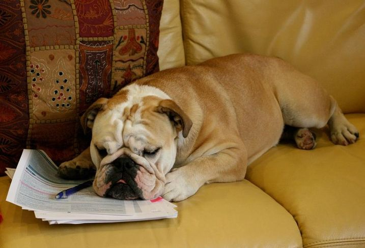 Dog At Work