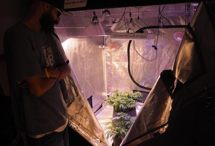 Wash Hydro DC Cannabis Plants