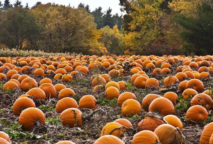 Embrace Autumn With These 8 Activities In Philadelphia