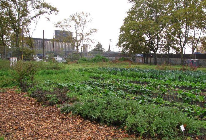 Five Of Brooklyn's Most Innovative Urban Farms