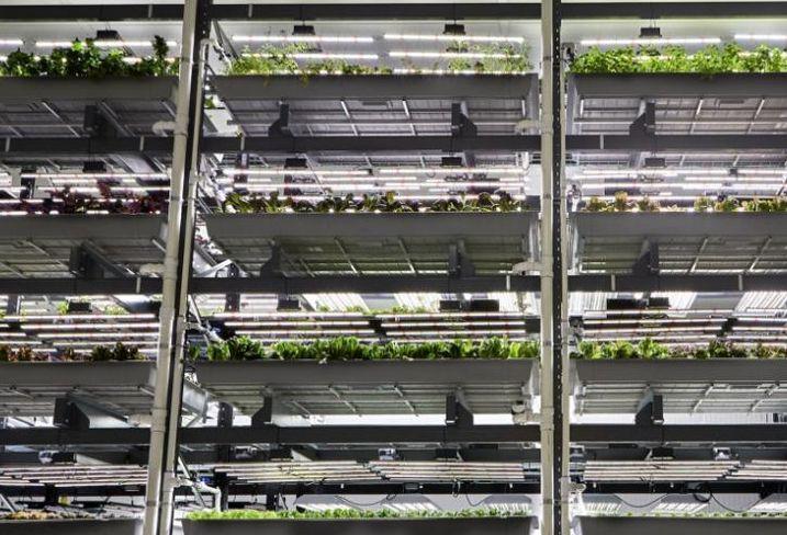Bowery Farming, Kearny, New Jersey