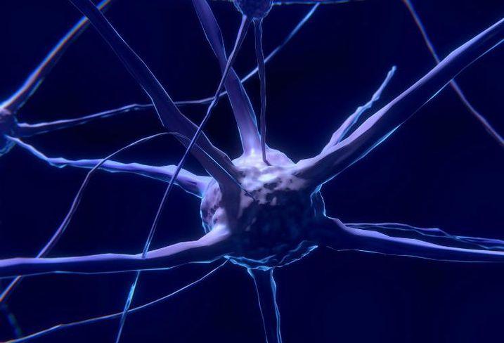 Nerve cell, neuron, brain, brain cells