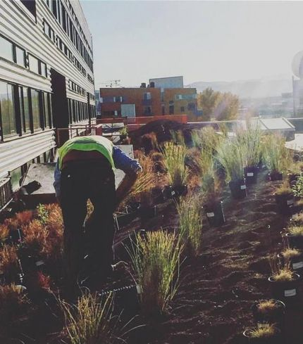 Zeppelin Development installs green roofs on its projects voluntarily.