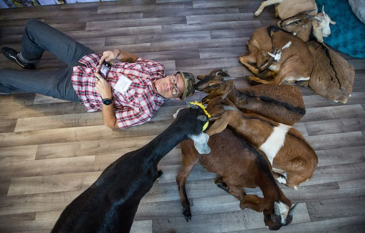 Is Goat Yoga The Greatest New Airport Amenity?