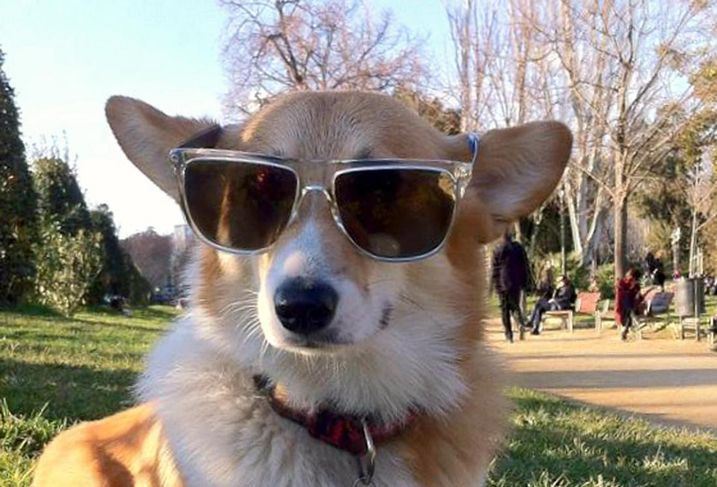 Cool dog hipster