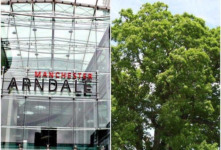 Manchester arndale oak tree