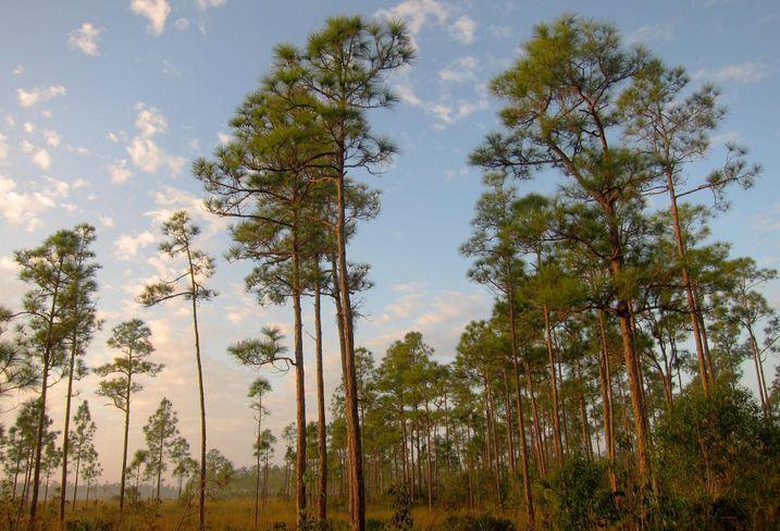 Will A Walmart Be Allowed On Rare Habitat In Miami?