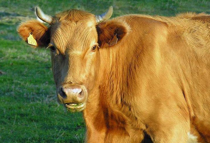 Birmingham Steak House Opens As Restaurant Bull Market Comes To An End