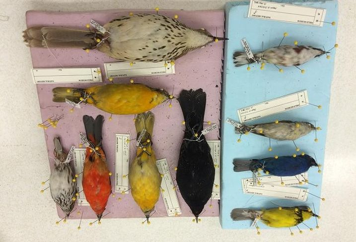 Chicago Is The Deadliest City For Migratory Birds: What Can CRE Do About It?