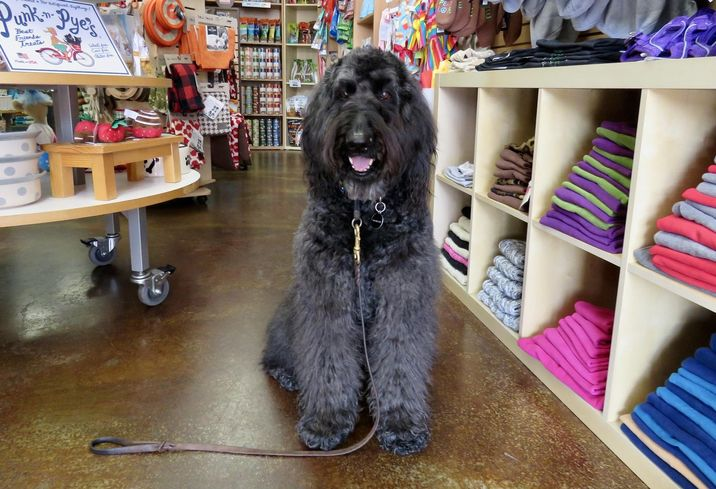 Could Dogs Be Retail's Best Friend?