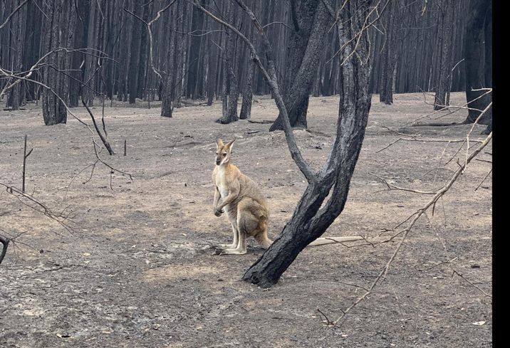 'Australia Is On Fire. We Must Do Things Differently.'