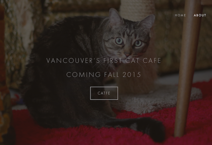 Vancouver Gets First Catfe