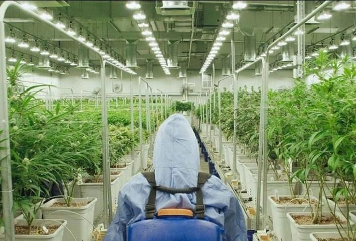From Illicit To Essential: Pandemic Helping Cannabis Industry Gain Firmer Footing