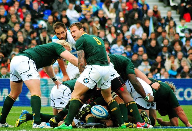 South African Investors Take On England As Pair Prepare To Meet In Rugby World Cup Final