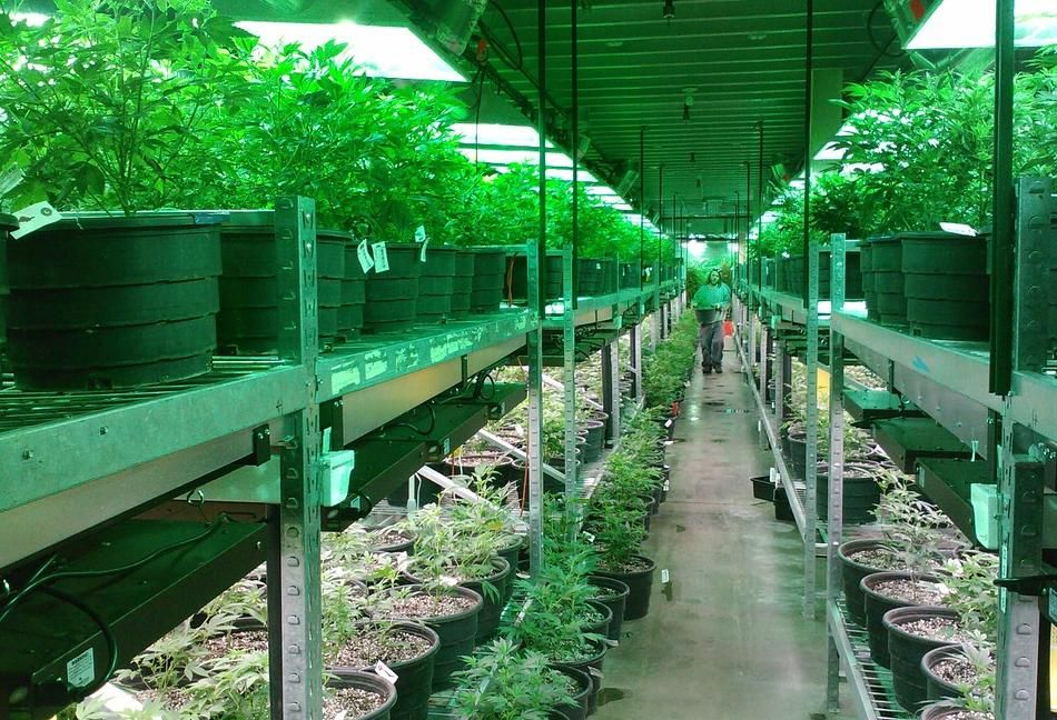 Cannabis Spurs Some CRE Deals In States Where It's Legal, But Concerns About Leasing Linger