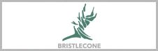 Bristlecone Construction Corp